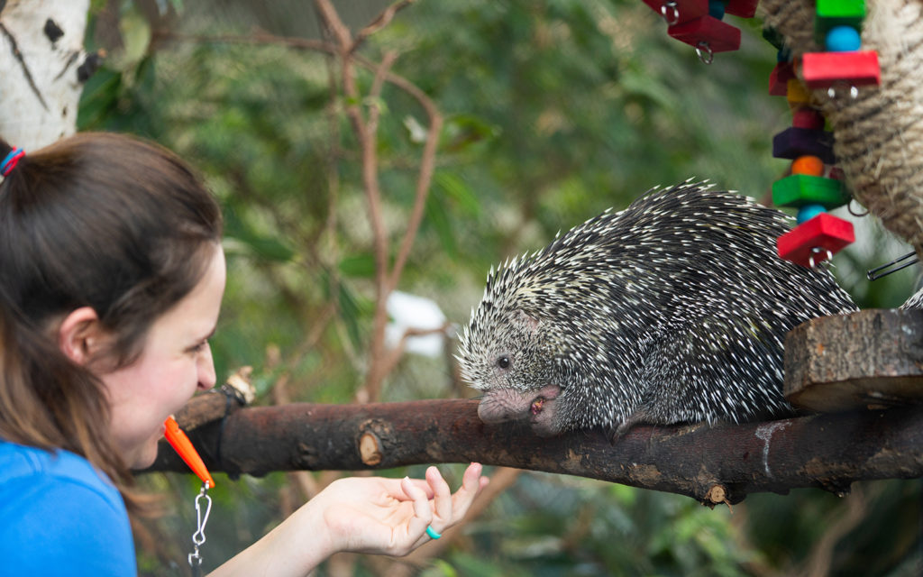 keeper and porcupine
