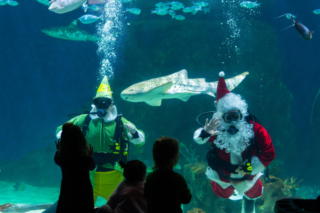 Divers dressed as santa and an elf are in the water waving to a crowd