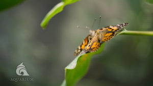 Two butterflies face each other on a leaf