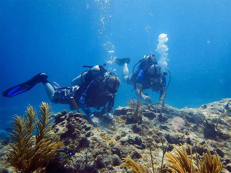 Pair of divers examining a reef